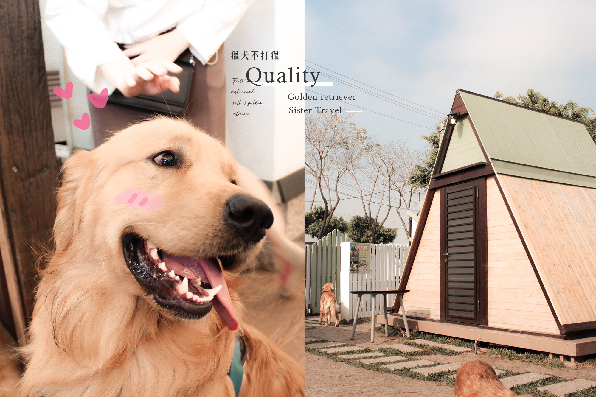 台中景點|獵犬不打獵-享受和黃金一起奔跑的時光,3月最新門票、入園資訊整理